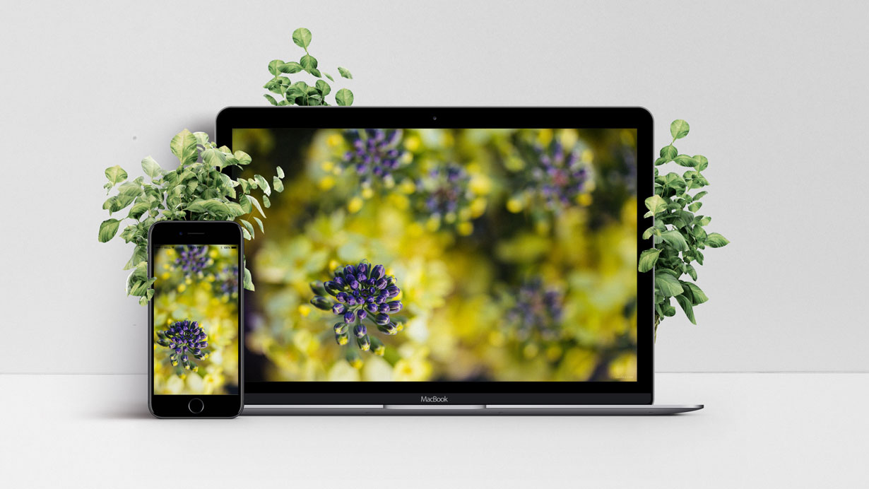 Mockup of wallpaper with yellow and purple flowers