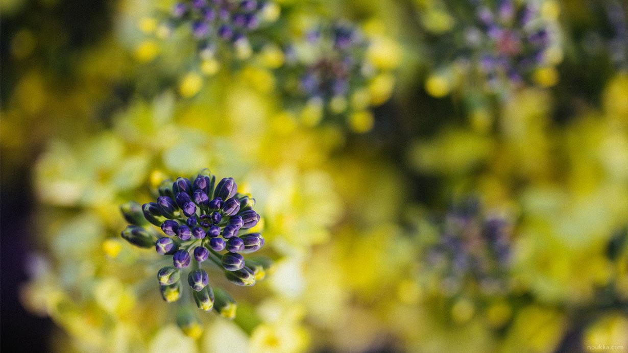Wallpaper with yellow and purple flowers