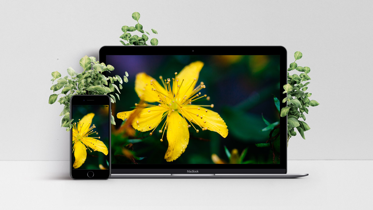 Mockup of apple devices with a yellow flower wallpaper