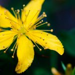 Free wallpaper for desktop and mobile with a yellow flower