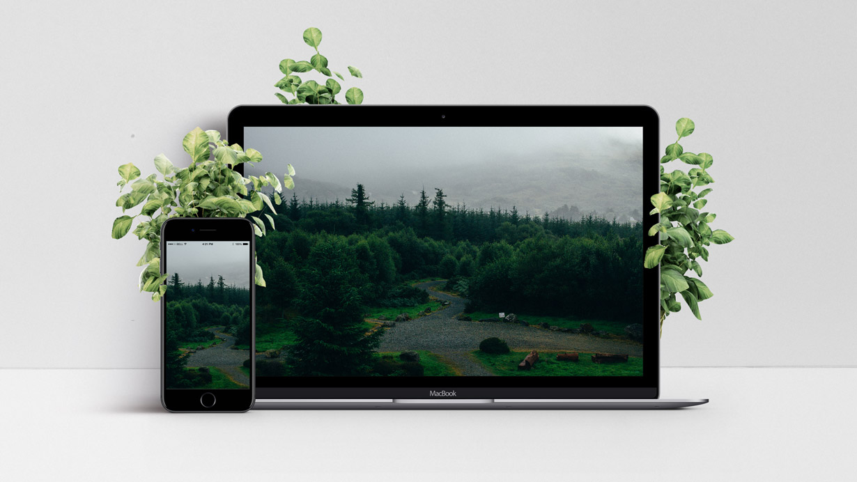 Mockup of Forest View Wallpaper